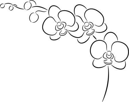 Illustratie van een orchidee bloem, geïsoleerd Vector Illustratie