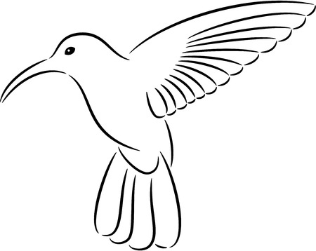 known: Vectored illustration as silhouette of hummingbird commonly known also as honey bird isolated