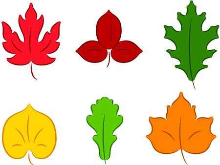 linden: Set of different leaves, isolated