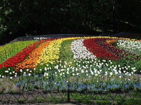 Colorful tulips on a sunny day. Banco de Imagens