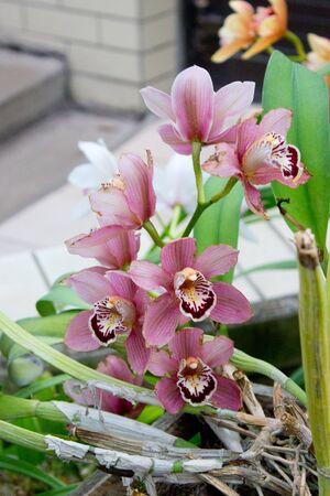 Pink orchid flower in the summer garden