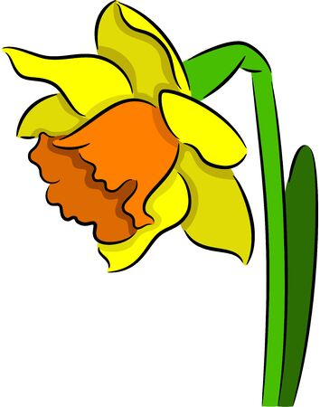 Vector illustration of a Narcissus flower, isolated