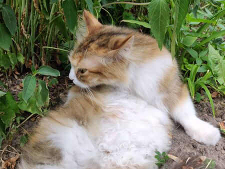Wild cat resting on the green grass