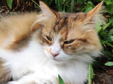 cat looking away outside in yard in early morning Banco de Imagens