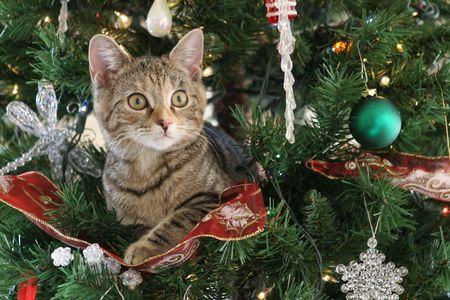 funny cat: Kitten in a Christmas Tree Stock Photo