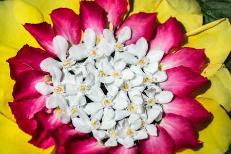 Beautiful composition consist from tropical flowers and leaves close up