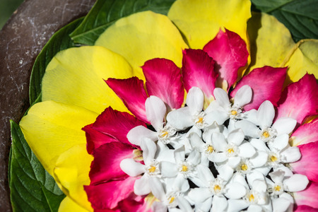 consist: Beautiful composition consist from tropical flowers and leaves close up