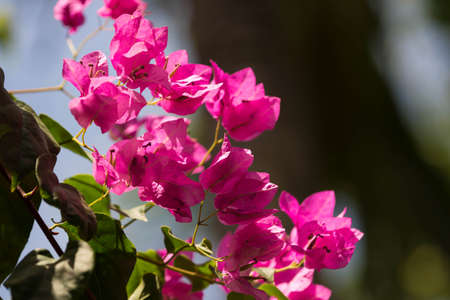 Beautiful tropical flower lit by the sun on a bright day Stock Photo