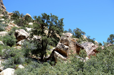 Hillside in Red Rock Canyon, Nevada Stock Photo
