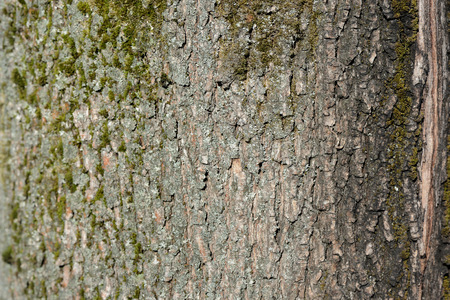 Tree bark covered with green moss texture background close up Stock Photo