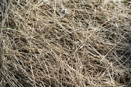 Close up view of dry grass in the spring forest. Natural background