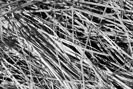 Dry grass close up. Natural background black and white