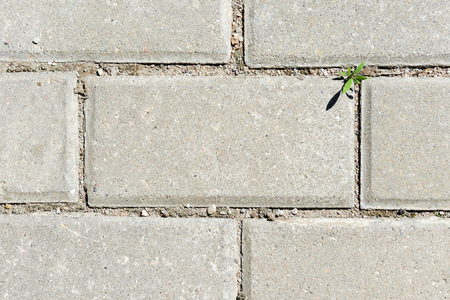 Gray paving slabs with green grass sprouts close up. Abstract background