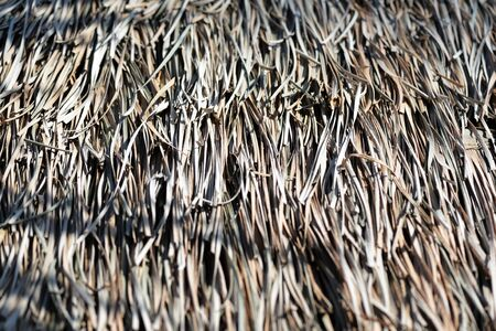 Roof of dry palm leaves close-up. Tropical natural background