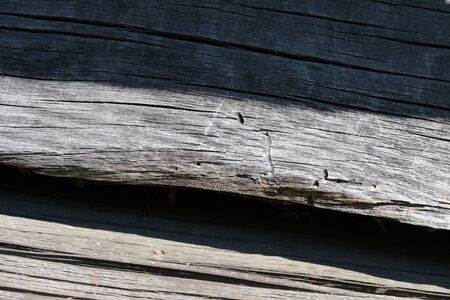 Old weathered log closeup in sunny day. Wooden background Фото со стока