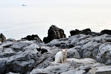 White and black cats are sitting on the rocks on the coast. Banco de Imagens - 131286664
