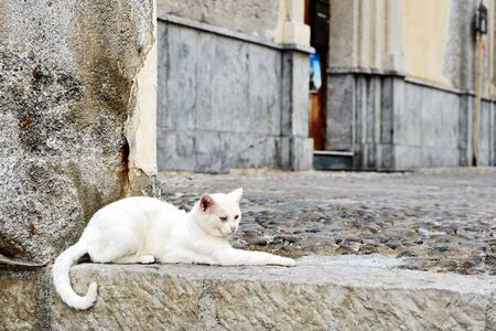 White cat lies on a stone step on the street of the old city
