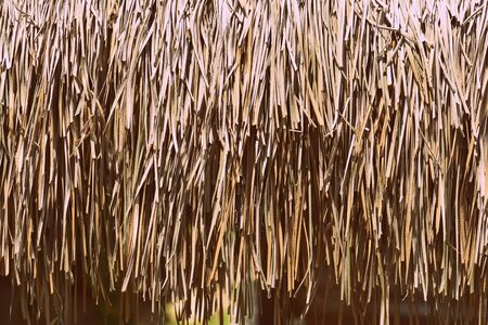 Palm roof  texture close up. Tropical background Banco de Imagens - 131286887