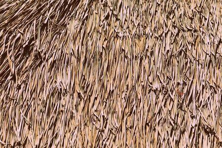 Palm roof texture close up. Retro style tropical background Banco de Imagens