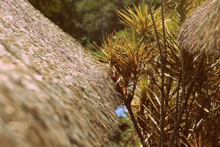 Palm roof close up on a background of tropical plants. Retro style