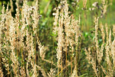 Dry grass in a meadow illuminated by the sun on an autumn day closeup Banco de Imagens - 131344793
