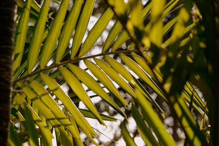 Palm tree leaves on a background of bright sky close-up. Tropical background retro style Banco de Imagens