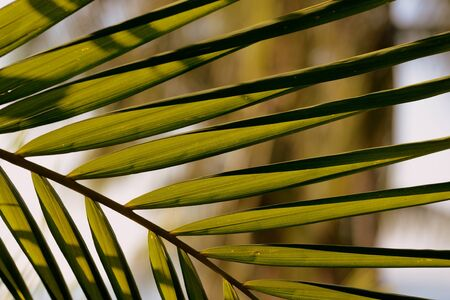 Palm tree leaves on a background of bright sky close-up. Tropical background retro style Banco de Imagens - 131346634