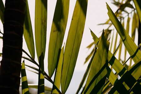 Palm tree leaves on a background of bright sky close-up. Tropical background retro style Banco de Imagens - 131346638