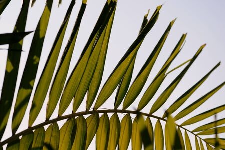 Palm tree leaves on a background of bright sky close-up. Tropical background retro style Banco de Imagens - 131346648