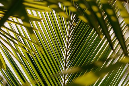 Palm tree leaves on a background of bright sky close-up. Tropical background retro style Banco de Imagens - 131346046