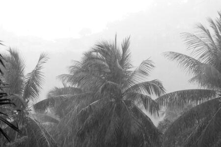 Heavy tropical rain on the coast of Koh Samui, Thailand. Black and white Banco de Imagens - 131346235