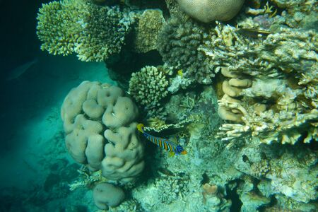 Red Sea underwater landscape with fishes and corals. Natural background