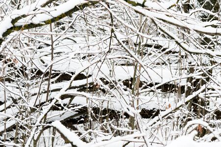 Branches of trees covered with snow in winter forest. Natural background Banco de Imagens