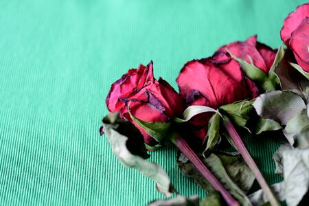 Red wilted roses on a green textile background close-up Banque d'images - 133511691