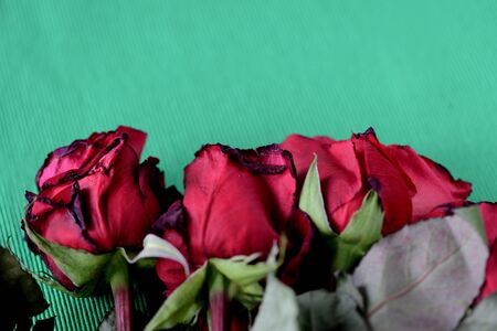 Red wilted roses on a green textile background close-up Banque d'images - 133511603