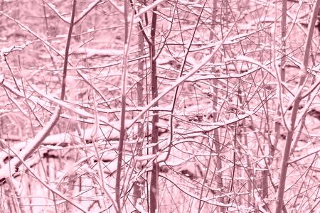 Winter forest covered with snow. Natural abstract background pink color toned