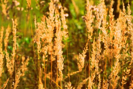 Dry grass in a meadow on an autumn day close-up. Retro style Banco de Imagens