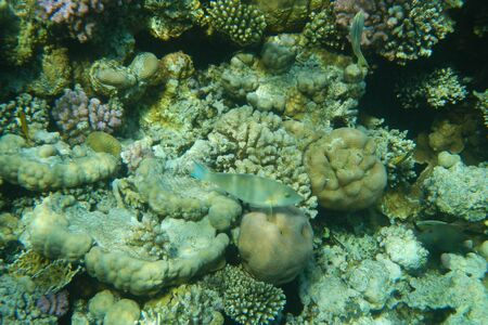 Colorful tropical fish swim among corals in the Red Sea, Egypt Stockfoto - 134007359