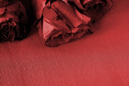 Wilted roses on a textile background close up. Red color toned