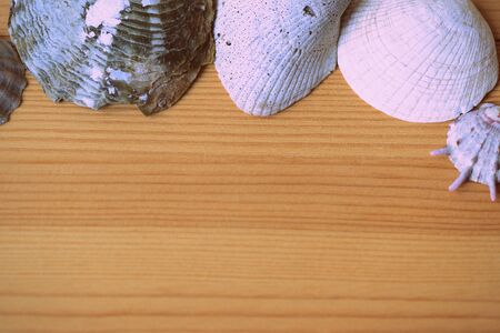 Sea shells on a wooden background close-up. Top view, copy space. Retro style toned