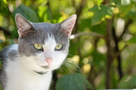 Cute white and gray cat for a walk in summer garden on a sunny day Stockfoto