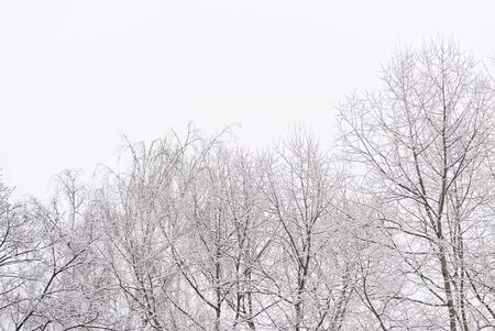 Tree branches covered with snow against the sky in a winter day. Natural abstract background