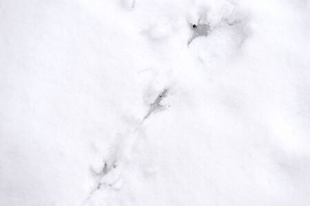 Traces of bird paws on the snow. Winter background Stockfoto - 137758941