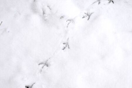 Traces of bird paws on the snow. Winter background Stockfoto - 137758951