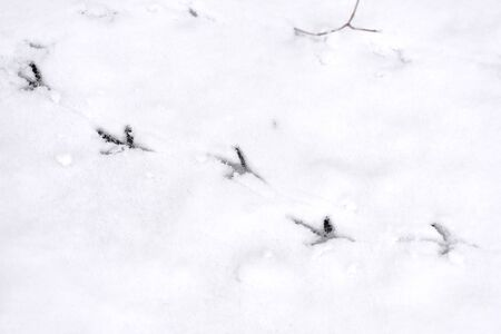 Traces of bird paws on the snow. Winter background Stockfoto - 137758957