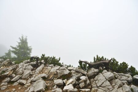 Misty morning in the alpine mountains. Bavaria, Germany. Mystical natural background Stockfoto - 137758970