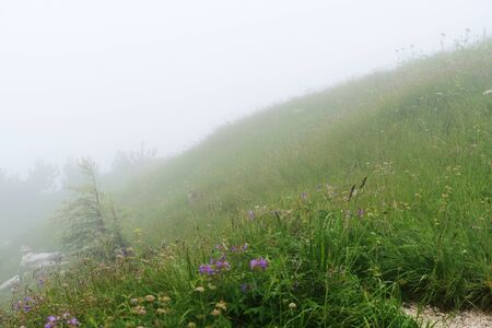 Misty morning in the alpine mountains. Bavaria, Germany. Mystical natural background Stockfoto