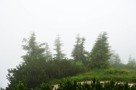 Misty morning in the alpine mountains. Bavaria, Germany. Mystical natural background Stockfoto - 137677992