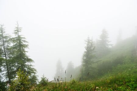 Misty morning in the alpine mountains. Bavaria, Germany. Mystical natural background Stockfoto - 137677052