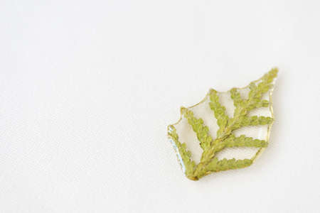 Thuja tree leaf filled with epoxy resin on a white textile background close-up. The basis for a pendant or earrings. Handmade jewelry in the manufacturing process. Top view, copy space Stockfoto